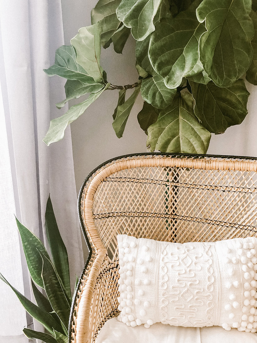 best indoor plants instagram worthy snake plant - Luxe Digital