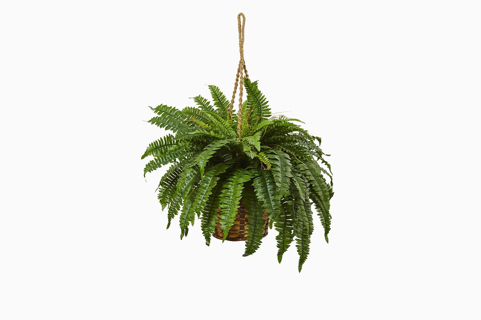 best indoor plants boston fern - Luxe Digital