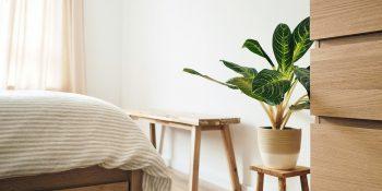 best indoor plants - Luxe Digital