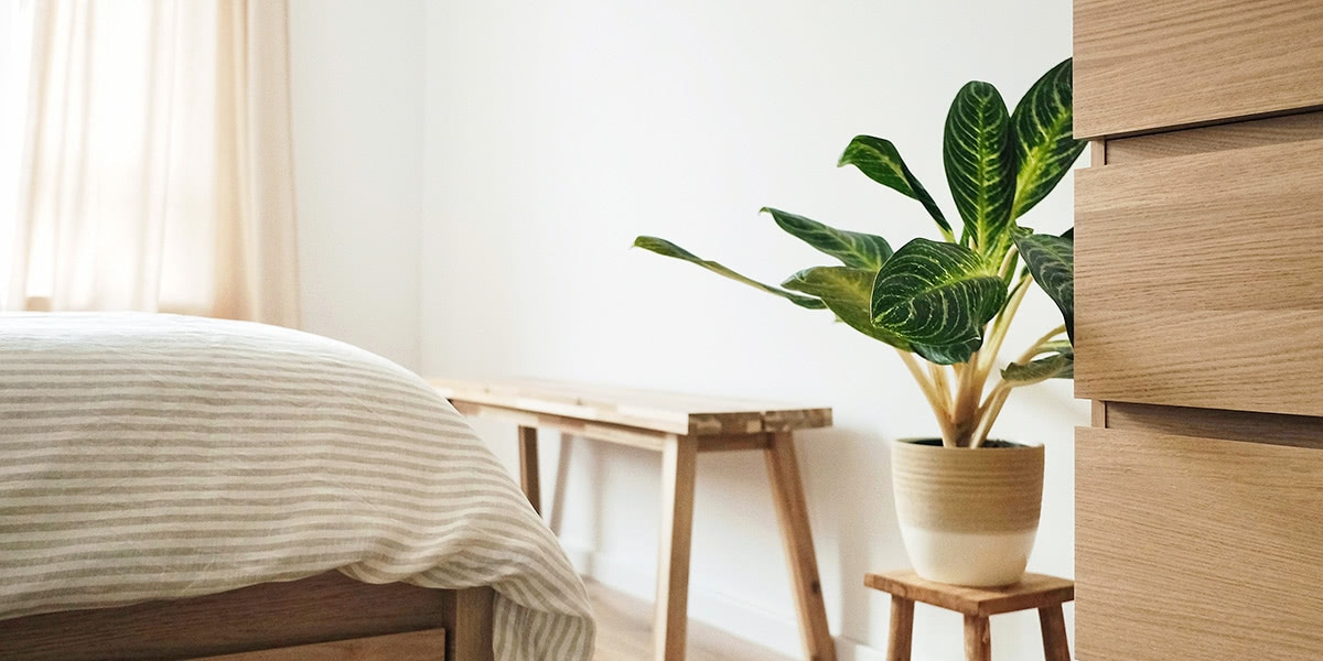 best indoor plants - Luxe Digital