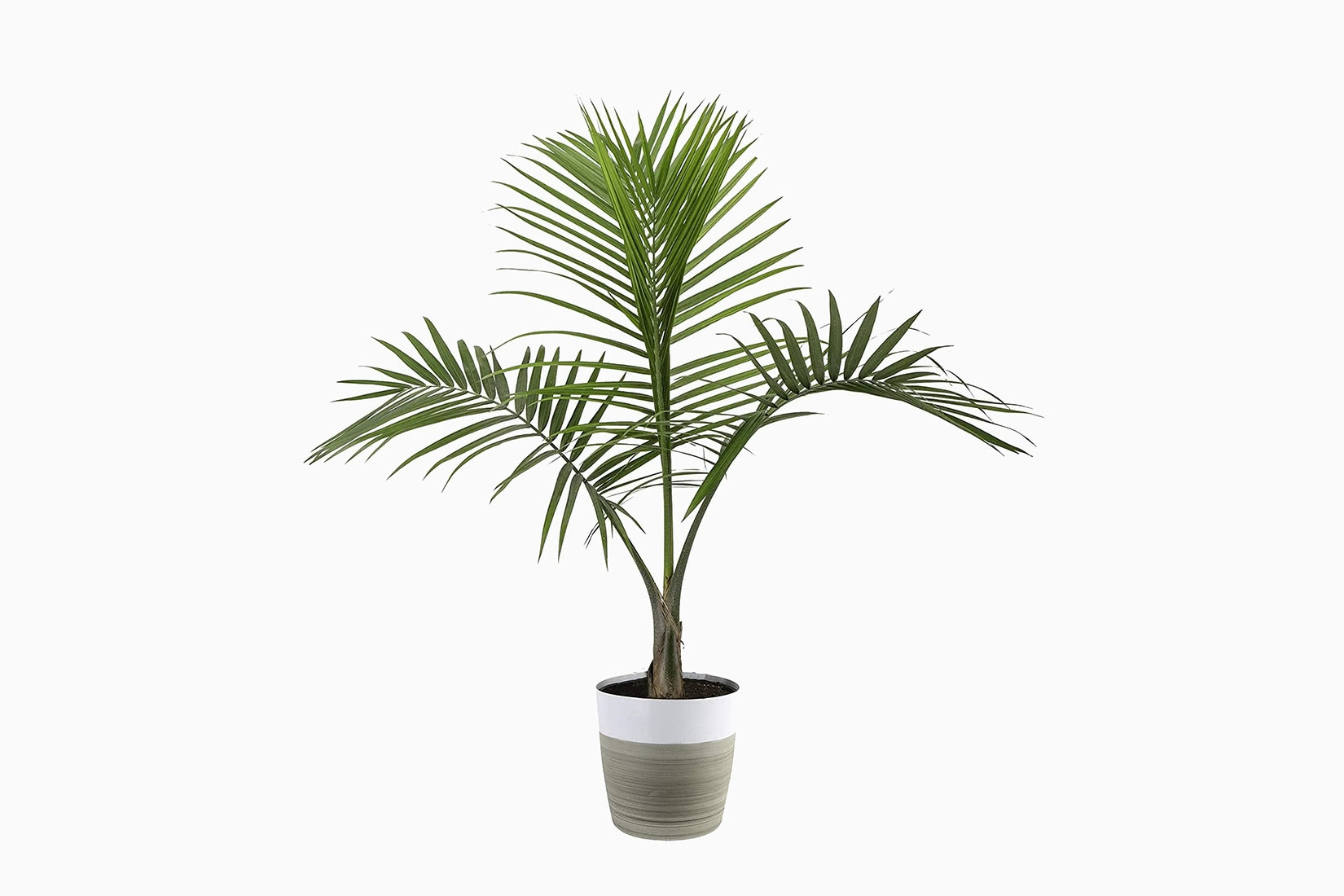 best indoor plants majesty palm - Luxe Digital