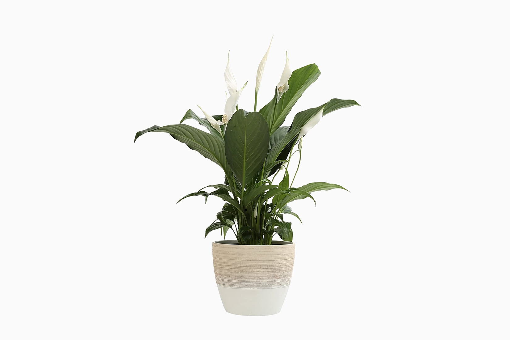 best indoor plants peace lily - Luxe Digital
