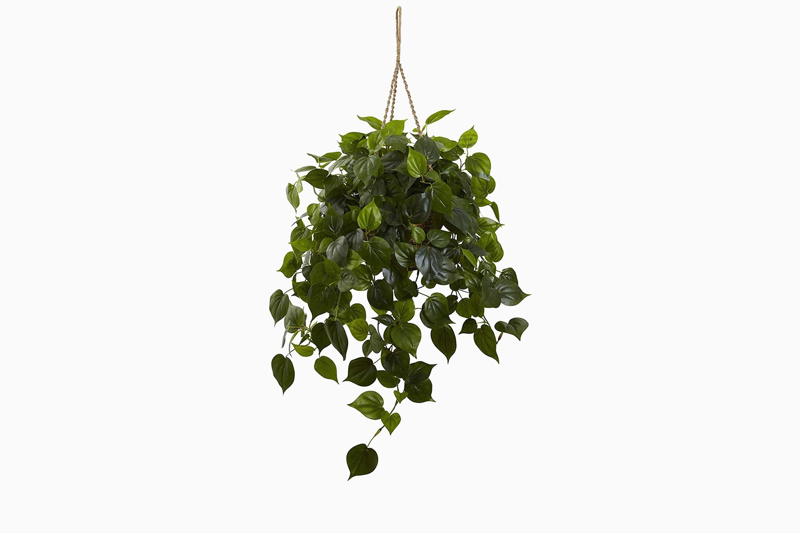 best indoor plants philodendron hanging basket - Luxe Digital