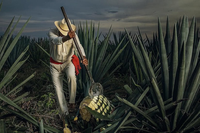 1800 tequila agave field méxico - Luxe Digital